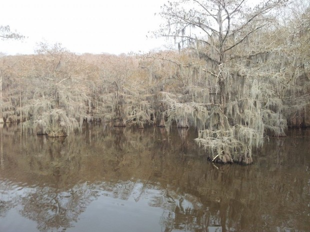 Lake Caddo: eerily Southern Gothic